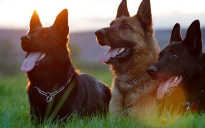 Conheça os erros mais comuns na criação dos cães