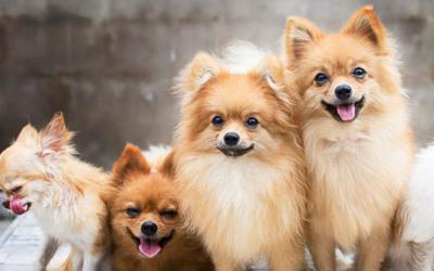Cães filhotes: como diminuir a ansiedade deles?
