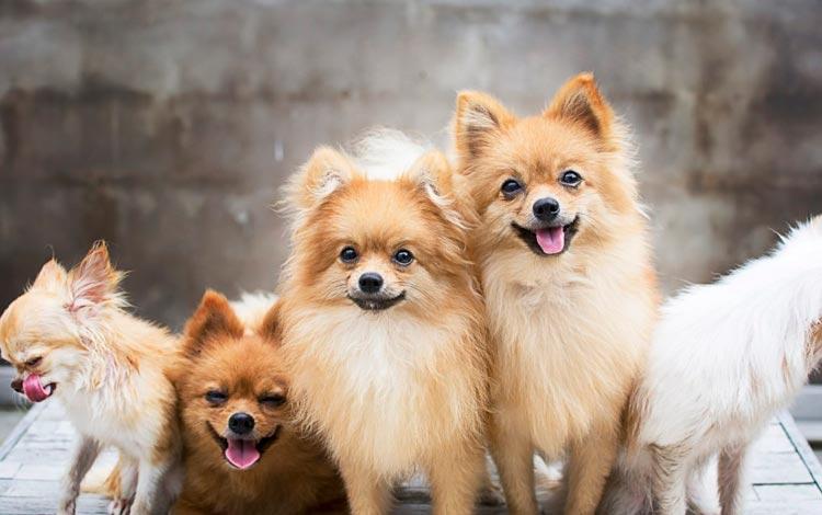 Cães filhotes