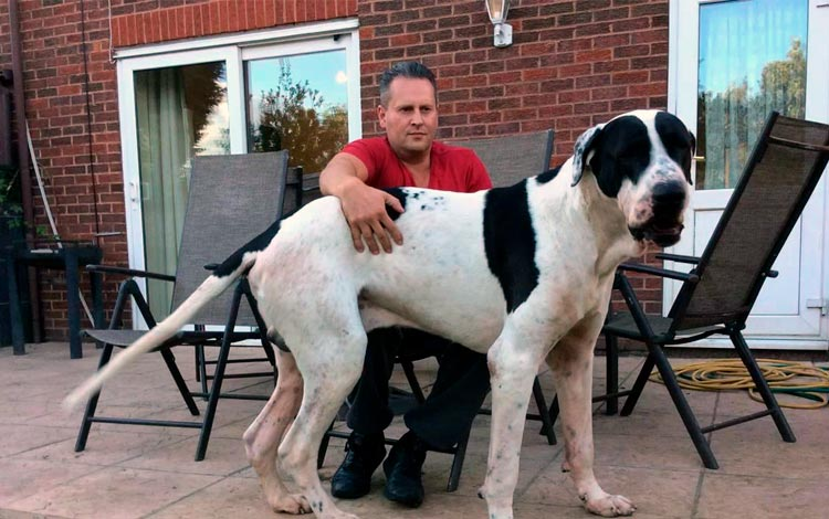 Conheça os 10 cães mais raros do mundo!